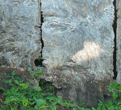 DETALL I TEXTURES D'UNA PORTA VELLA (Joan Biarnés) Tags: detalle macro puerta girona 330 porta detall maiàdemontcal garrotxa