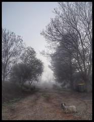 Its Another Foggy Start To The Day (florahaggis) Tags: bethanga victoria australia winter fog morning dog trees
