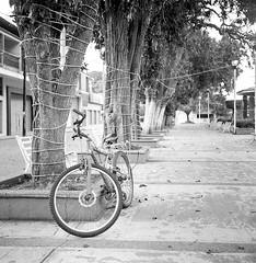 La solitaria (Marcos Núñez Núñez) Tags: street streetphotography rolleiflex streetphotographer national mx formatomedio analógico film 6x6 filmphotography ilfordhp5 blackandwhite blancoynegro byn bw monochromatic