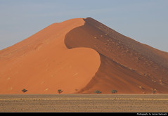 Sand Dune, Namib-Naukluft NP, Namibia (JH_1982) Tags: desert wüste desierto dune red rot dunes dünen sand sanddünen trees tree duna 沙丘 砂丘 사구 дюна namib naukluft np nationalpark national park pn parque nacional parc landscape nature scenery scenic 納米布沙漠 ナミブ砂漠 나미브 사막 намиб 荒漠 砂漠 пустыня namibia namibië 纳米比亚 ナミビア 나미비아 намибия