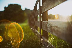 (Sarah Rausch) Tags: sony rikenon55mm14 vintageglass fencefriday fence rural flare lensflare weeds country igotnothing untitled rideoutthewave tennessee franklin fridayhasawholenewmeaning southern summer sunny evening wildflowers depth shallow