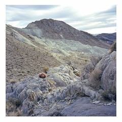 Cactus and mine tailings (ADMurr) Tags: california desert cactus mine tailings mojave 2014 rolleiflex 35 e zeiss planar kodak ektar dba1045