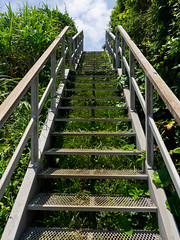 summer stairs (kasa51) Tags: stairs steep weed summer yokosuka japan 猿島 階段