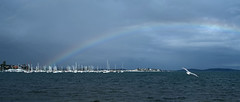 Rainbow flyer (OzzRod) Tags: pentax k1 supertakumar50mmf148elements stitch panorama rainbow lake yachts seagull belmont lakemacquarie dailyinaugust2019