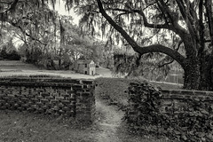 Over the Garden Wall (dshoning) Tags: fencefriday wall trees moss southcarolina bw spring