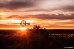 Lever de soleil sur la pampa (laurent fiol) Tags: péninsule valdès chubut argentine argentina pampa sunlight soleil éolienne