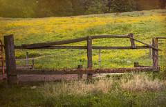 Amish Contraption (TuthFaree) Tags: fence old wood posts amish ohio mthope fencefriday hff rural pasture