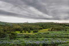 Sky drawing (Zoom58.9) Tags: sky clouds flower trees green grasses landscape nature outside europe iceland himmel wolken blumen bäume grün gräser landschaft natur draussen europa island sony lupien lupinen