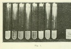 This image is taken from Page 737 of The Journal of laboratory and clinical medicine, 07 (Medical Heritage Library, Inc.) Tags: biological assay diagnosis laboratory disease medicine research gerstein toronto medicalheritagelibrary date1915 idjournaloflaborat07cent