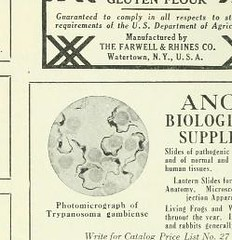 This image is taken from Page 33 of The Journal of laboratory and clinical medicine, 08 (Medical Heritage Library, Inc.) Tags: biological assay diagnosis laboratory disease medicine research gerstein toronto medicalheritagelibrary date1915 idjournaloflaborat08cent