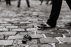 La chaussette égarée. (LACPIXEL) Tags: chaussettes socks calcetín media route pavé cobblestone adoquín jambes legs piernas rue street calle perdu égaré lost perdido sony flickr paris callejera lacpixel