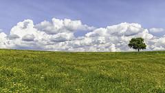 A flower meadow in Lavanttal (a7m2) Tags: carinthia austria wolfsberg lavanttal bad stleonhard lavant wandern joggen spazieren urlaub holsdays natur fauna flora blumen baum wiese sommer urlauber tourismus fremdenverkehr klippitztörl paradise