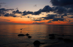 Sunset mood (Ingrid0804) Tags: sunset sunsetmood sea sky clouds beach bird