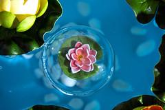 _VO17965FL (Foto Massimo Lazzari) Tags: flora ninfea bolladisapone stilllife stagno fiori