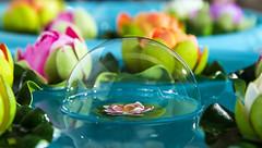 _VO17997aFL (Foto Massimo Lazzari) Tags: flora ninfea bolladisapone stilllife stagno fiori