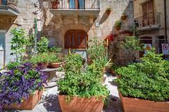 The streets of Bari (Leaning Ladder) Tags: bari italy italia puglia apulia flowers canon 7dmkii leaning ladder leaningladder 7d mkii