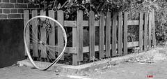Gelukkig is appen op de fiets verboden. (Digifred.nl) Tags: digifred 2019 nikond500 amsterdam nederland netherlands holland iamsterdam straat street city grachten streetphotography hff fencedfriday hek wiel fiets wheel bike fence