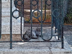 ... (Jean S..) Tags: fence animal cat outdoors street pilar day grey