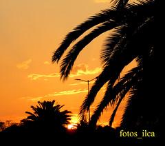 Pôr do Sol (fotos_ilca) Tags: fotosilca 2019 sunset pôrdosol portugal baixadabanheira parquezecaafonso