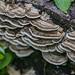funghi 5