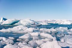 Jökulsárlón (Fajar Pangestu) Tags: outdoor day landscape nature ice cold cloud sky blue overcast water iceberg iceland travel