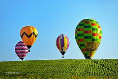 Iowa Field_199567 (rjmonner) Tags: balloons color rural sunrise air soybeans field green hotairballoons farming crop grow country blue rise horizon up nikon midwest iowa