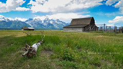 The Tetons and the Moulton Barn! (peddhapati) Tags: moulton barn haskar peddhapati photography nature travel scenic holiday vacation beautiful volcanic valleys mountains national park landscape grand canyon yellowstone famous wyoming usa outdoors prismatic 2019 summer hot spring geysers nikon d90 dslr teton lake