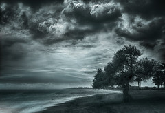 Taray 2 (Manuel Peña Jiménez) Tags: taray árbol playa naturaleza aguadulce almería cielo nubes tormenta blancoynegro bn bw blackandwhite fujifilmxs1 elitegalleryaoi