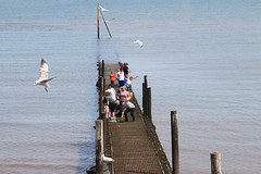 Crabbing on the jetty (Gill Stafford) Tags: gillstafford gillys image photograph wales northwales conwy rhosonsea jetty crabbing crabs fishing gulls sea resort lsummer holidays