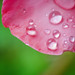 Water drops on flower leaf