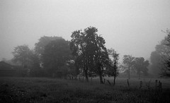 Apparent silence (Rosenthal Photography) Tags: analog ilfordhp5 schwarzweiss olympustrip35 asa400 kleinbildformat ff135 epsonv800 ilfordlc2912920°c9min 35mm sommer frühling ilfordrapidfixer 20190601 trees blackandwhite mist fog landscape mirror backyard mood meadow silence fields mistymirror apparentsilence trip olympus 40mm f28 trip35 olympus35 14 epson hp5 rapid ilford 129 v800 hp5plus fixer lc29