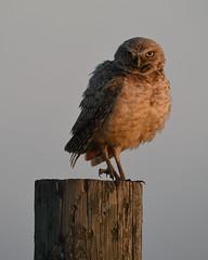 Morning Post (jrlarson67) Tags: badlands national park south dakota nikon d850 golden hour