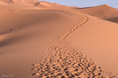 Path to the weekend (Irina1010) Tags: sand dunes prints path sahara desert morocco 2019 footprints traces landscape nature canon coth5 outstandingromanianphotographers
