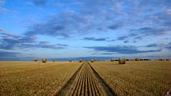 PAYSAGES DE PICARDIE 043 (aittouarsalain) Tags: picardie paysage landscape champ blé moisson foin paille meule ciel nuages aube aurore