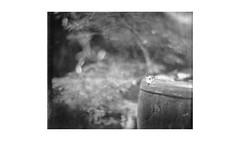 (WOGO*) Tags: aero ektar 178mm graflex super d polaroid type 55 instant film bw