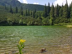 Lacul Sureanu