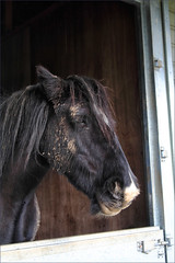 Mud Pack (meniscuslens) Tags: retired horse trust charity princes risborough mud stable high wycombe aylesbury buckinghamshire