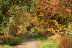 Autumnal Avenues (RoystonVasey) Tags: canon eos m 1855mm stm zoom cumbria lake district ldnp country lane autumn colour tree