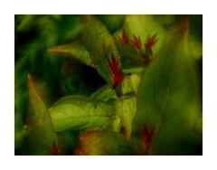The ant (BeMo52) Tags: art flora bokeh blätter closeup2 nature leaves natur garten weigelia olympusm40150mmf4056r weitwinkelkonverter045x hss