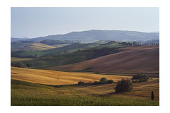 Waves. Made of meadows and fields. (Gudzwi) Tags: sommerimpression summerimpression licht leuchten toskana montepulciano italien felder wiesen ginster klee zypressenallee landhaus landwirtschaft nachderernte landschaft hügel zypressen sommer sonne schatten flirrend abendlicht meadow smileonsaturday meadowsandfields light shine tuscany italy fields grasslands broom clover country house agriculture afterharvest landscape hill cypress summer sun shadow shimmering eveninglight sunlight sonnenlicht