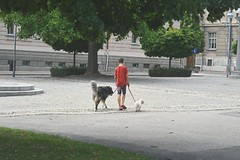 The dog sitter (Mi-Fo-to) Tags: slovenja dog sitter dogs boy ragazzo cani passeggio walk maribor park
