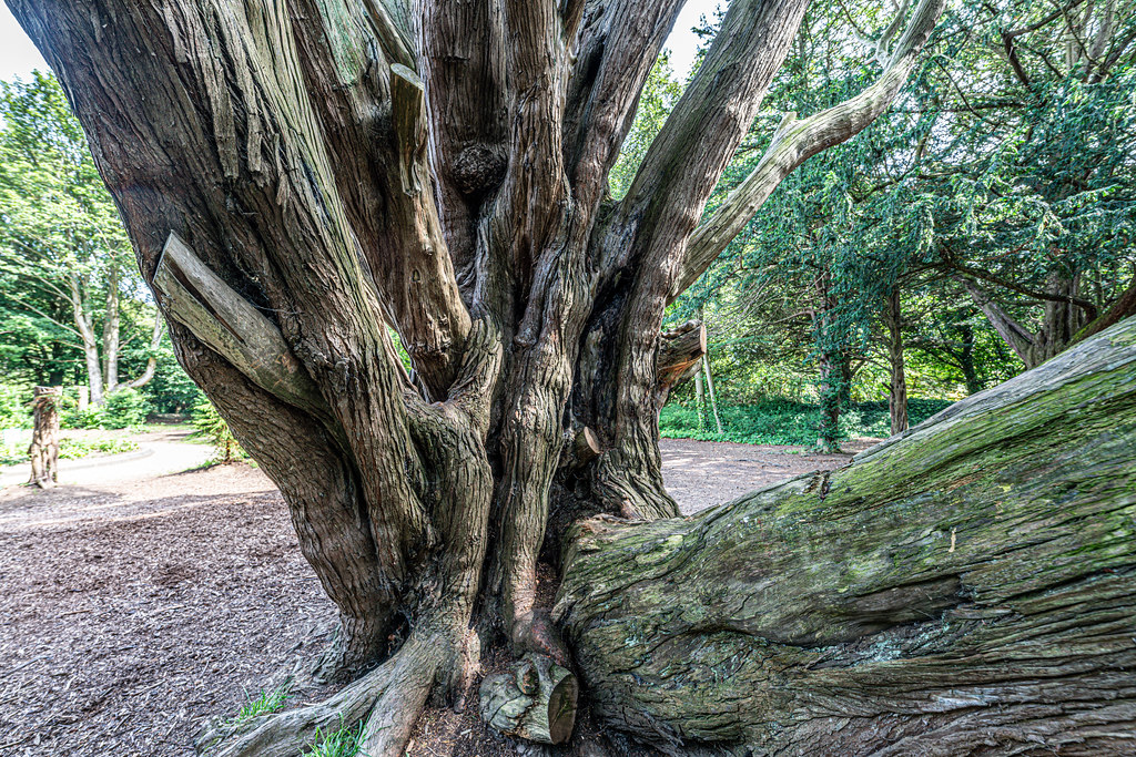 THE TREES OF ST. ANNE'S PARK [MANY INTERESTING SHAPES]-154765