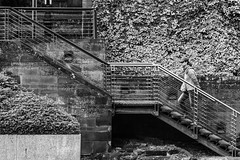 Street (lightersideofdark) Tags: blackwhite stairs old bush outside outdoors dark