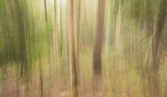 One Vision (Emerald Imaging Photography) Tags: narooma bermagui tilba tilbahills newsouthwales nsw sydney australia australian australianlandscape australianbush tree trees bush aussie icm daylight sunrise forest scrub