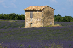 P1140277 (alainazer2) Tags: riez provence france fiori fleurs flowers fields champs ciel cielo sky colori colors couleurs lavande lavanda lavender pierres stones maison bâtiment