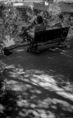 Shadowplay (bingley0522) Tags: leicaiiic zeissjenasonnar50mmf15ltm trix hc110h epsonv500scanner ashlandoregon lithiapark reflection shadows parkbench autaut
