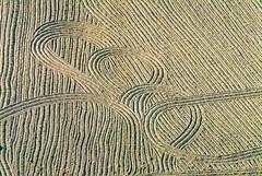 Farmers - Painting - 105 (Aerial Photography) Tags: by la ndb 30072003 ackerbau bauernmalerei bavaria bayern beige braun buchaerlbach farbe feld fotoklausleidorfwwwleidorfde fotoklausleidorfwwwleidorfaerialcom grafik kurve landwirtschaft linien luftaufnahme luftbild p2 s2p19908 spuren abstract abstrakt aerial agriculture bend brown color colour farmerspainting field graphicart graphics lines outdoor traces tracks trails buchaerlbachlkrlandshut bayernbavaria deutschlandgermany