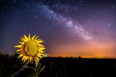 Seguidor Solar (Jose_Benito) Tags: roja girasol noche nocturna via lactea amarillo estrellas cielo enfoque doble