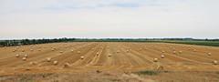 Straw Bales After Harvesting of Cereals (nagyistvan8) Tags: nagyistván túrkeve magyarország magyar hungary nagyistvan8 természet nature növény plant gabona grain nyár summer égbolt sky felhők clouds háttérkép background blur mező field grainfield aratásután afterharvesting bálák bales strawbales színek colors sárga barna zöld kék fehér yellow brown green blue white mosoly smile smileonsaturday meadowsandfields 2019 nikon