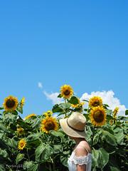 2019 Sunflower field #1 (Yorkey&Rin) Tags: 2019 bluesky em5markii hokutocityakeno japan july olympus olympusm14150mmf4056ii p7300096 rin summer sunflower sunflowerfestival sunflowerfield woman yamanashi ひまわりまつり 夏 向日葵 山梨県 七月 女子 青空 北杜市 明野